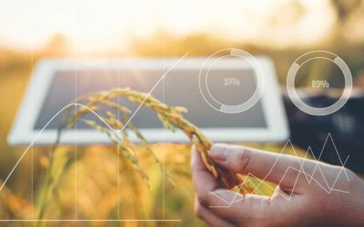 What are the Best Applications of IoT in Agriculture?
