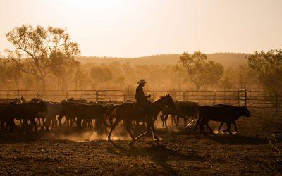 Carbon Farming: A New Market for Australian Farmers