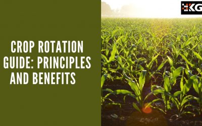 CROP ROTATION GUIDE: PRINCIPLES AND BENEFITS