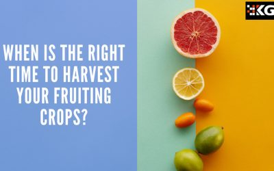 WHEN IS THE RIGHT TIME TO HARVEST YOUR FRUITING CROPS?