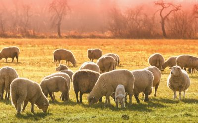 Agribusiness News: Measuring Enteric Methane Emissions from Livestock