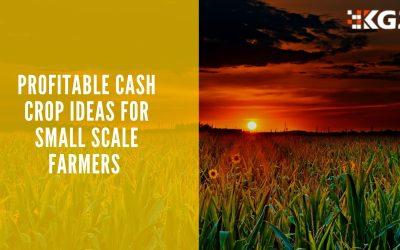 PROFITABLE CASH CROP IDEAS FOR SMALL SCALE FARMERS